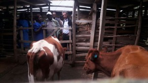 Send a Cow Project Western Kenya
